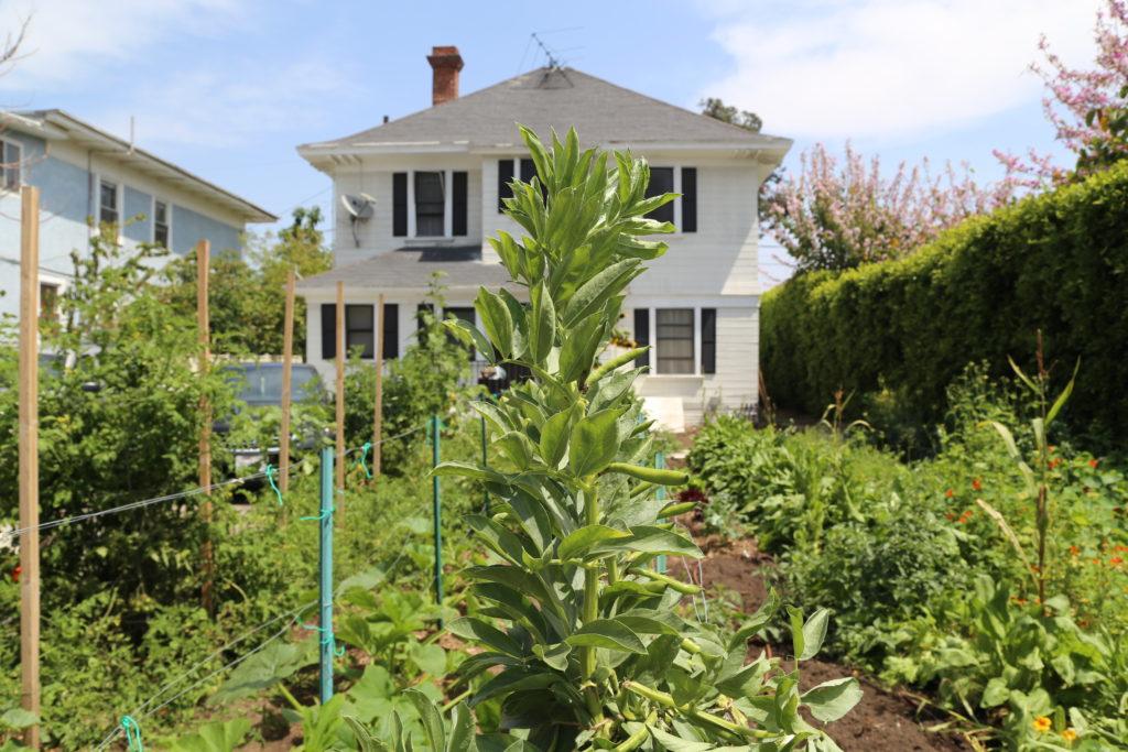 1000m² de jardin pour montrer comment cultiver et le manger