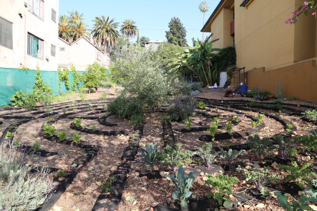 Seeds of hope : quoi de mieux pour méditer