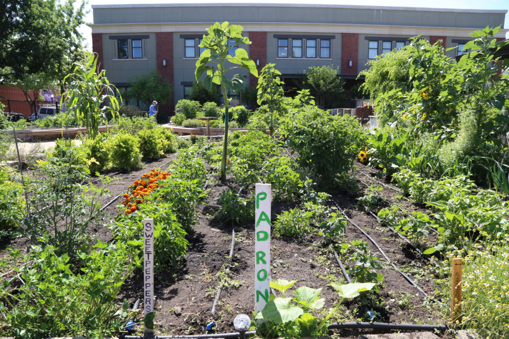 Sacramento Food Bank and Family : demonstration garden