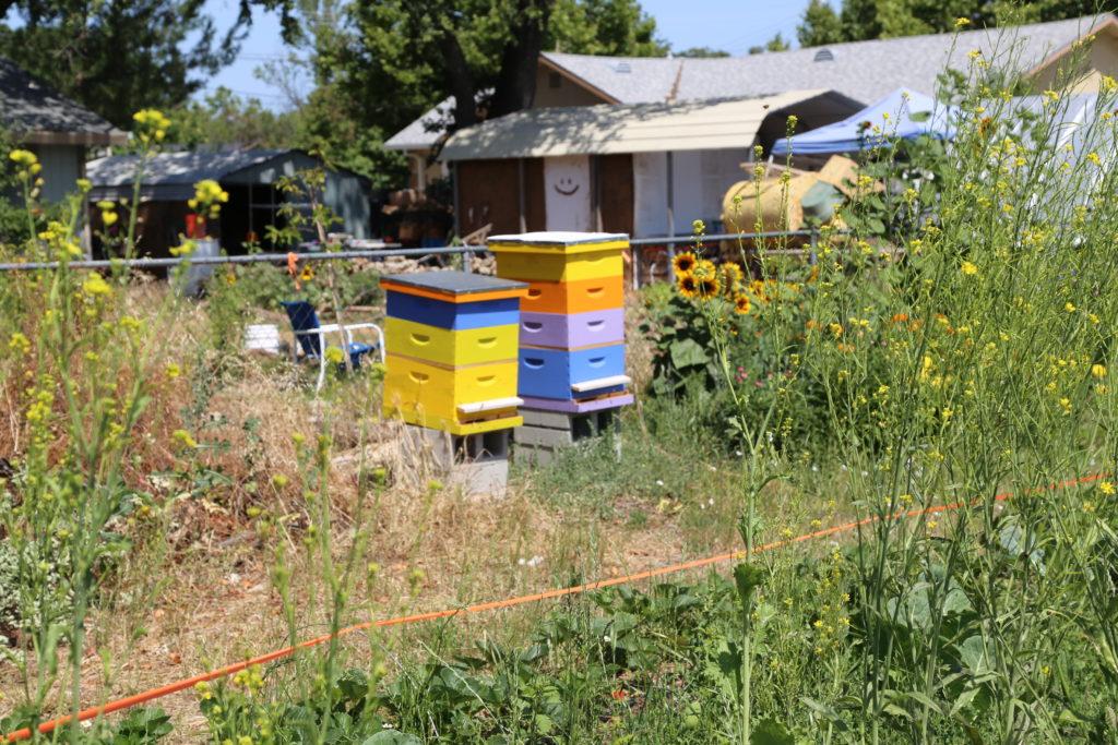 Les ruches de B's Bro chez Root 64