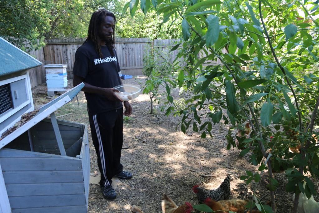 Chanowk qui récolte les oeufs de ses 20 poules