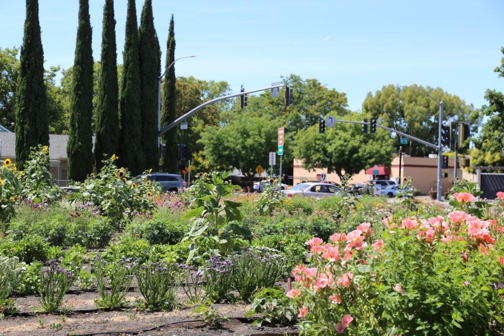 Flourish Farm en plein coeur de West Sacramento