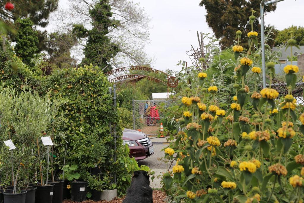 Spiral garden séparé par la route entre la pépinière et la ferme communautaire