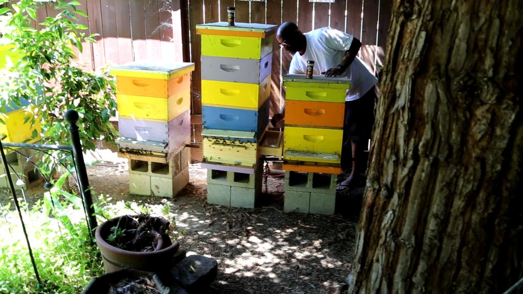 Kenneth qui surveille ses abeilles chez B's Bros Honey