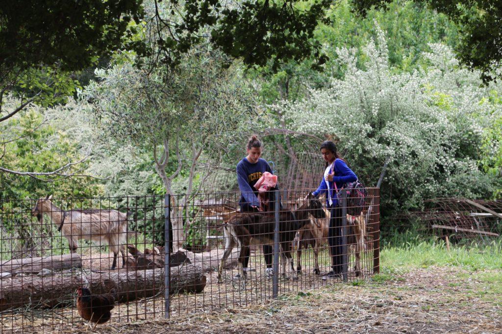 Des élèves venant carresser les chèvres après les cours à Edible SchoolYard Garden
